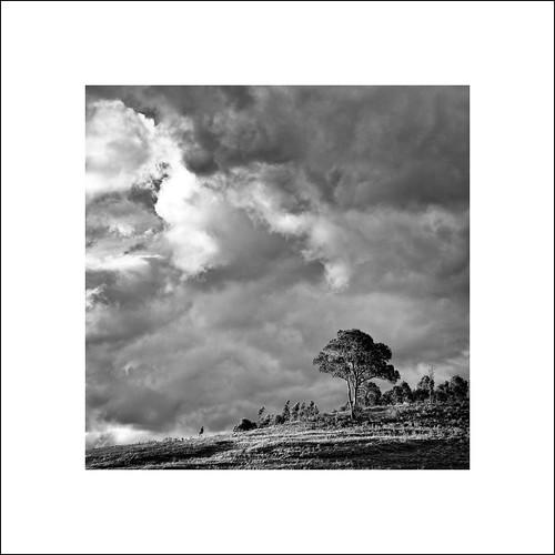 light sunset sun white storm tree clouds dark frame series shining thunder oninous