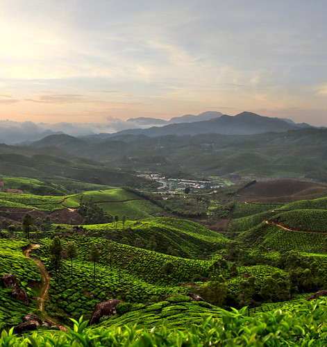 sunset sky india green field tea kerala plantation southindia munnar