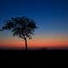 Image: Timbavati Sunset