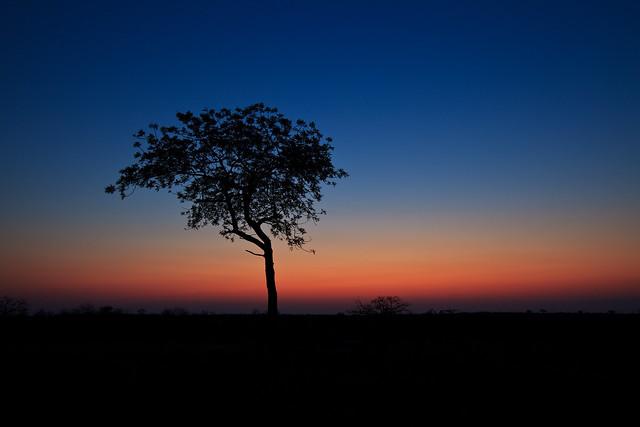 Next: Timbavati Sunset