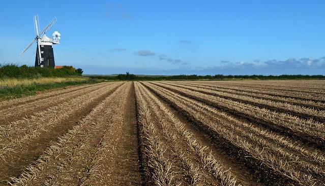 Ex potato field