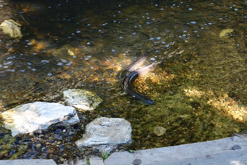 Tame Eels at Jester House Café | by ndimmock