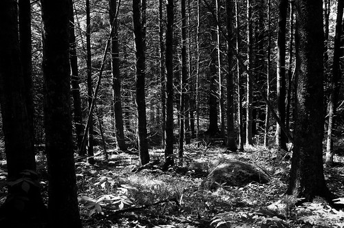 2016 aperture3 bw blackwhite canada cantonsdelest coaticook contrastes d90 été juillet nature nikkor18300mm nikon nikond90 noiretblanc paysage saintvenantdepaquette sapinière québec 2016©rpd'aoust montréal
