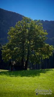 Im Schutz des Baumes