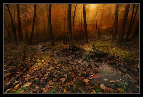 trees sun sunlight mist fall beautiful fog sunrise rocks gorgeous wv westvirginia cacapon berkeleysprings cacaponstatepark morgancounty