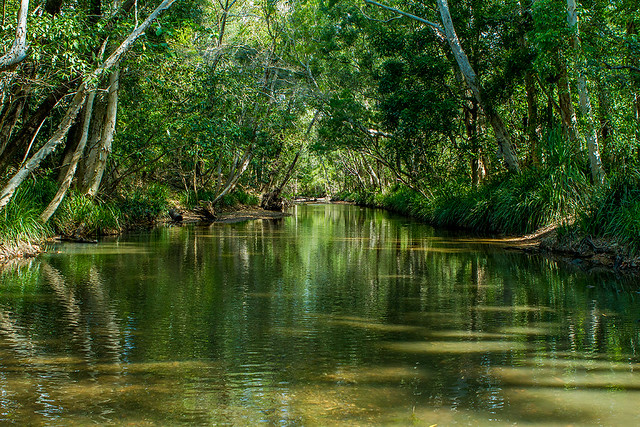 Crystal Creek Olera