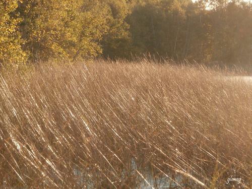 house museum lawrence october novascotia wetlands marsh 2012 maitland