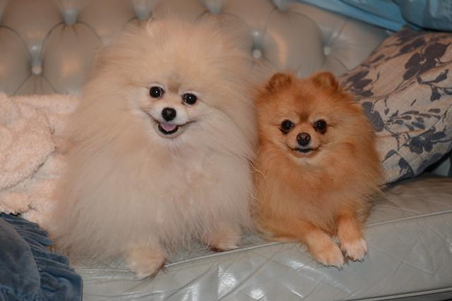 Trish and Maxi