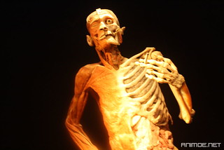 Body Worlds Exhibition | by phossil