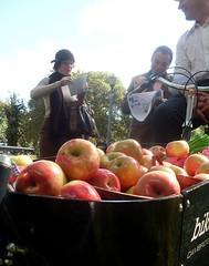 Bearer of Apples