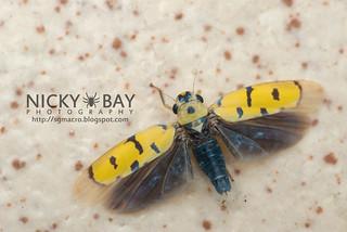 Leafhopper (Anatkina annandalei) - DSC_5621