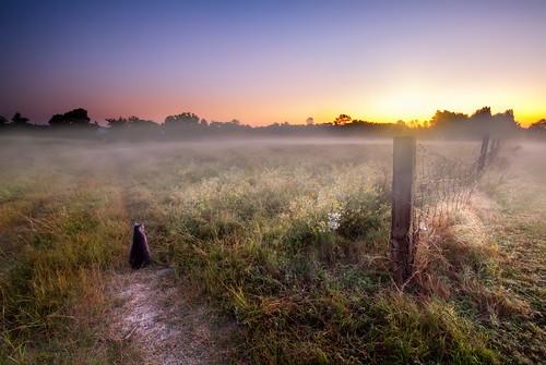 sunset fog canon paisaje amanecer gato flog neblina gat sunsetsunrise nationalgeographic retos duelos abigfave afdp52s38 arturocid
