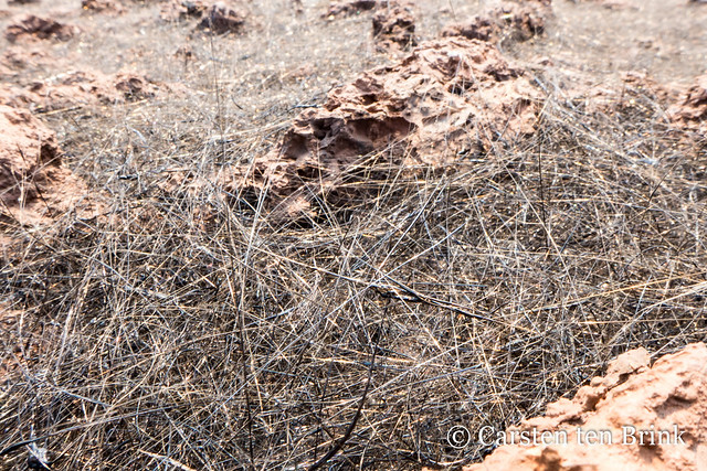 Pele's hair in abundance