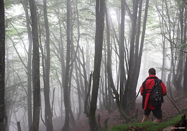 Entre hayas y niebla