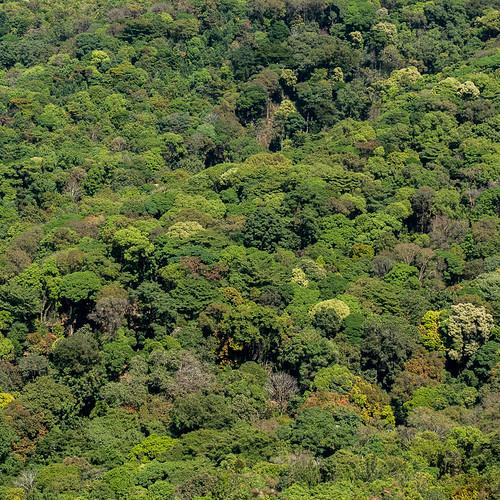 arbres végétation paysage forêt montagnes kabbinakad karnataka inde ind
