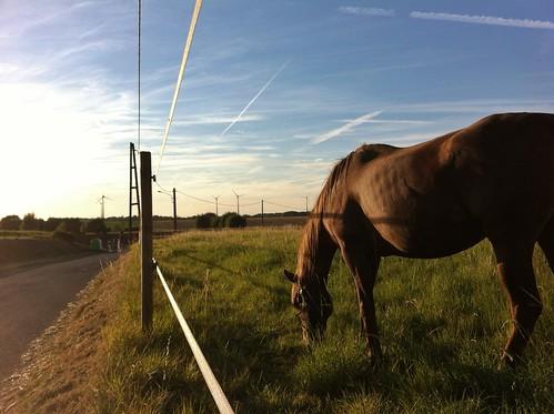 sunset nature animal cheval soleil belgique wallonie hainaut havay