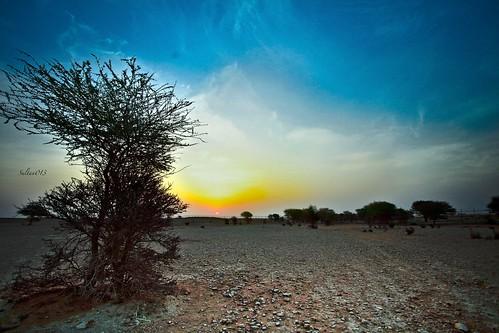 canon5d شمس غروب الطبيعه منظر نباتات صحراء جبال سحاب رمال رمل رم سلطانالسويد canon1740ef40
