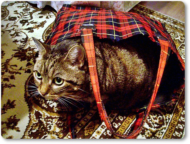 Cat in the bag-Cica a szatyorban