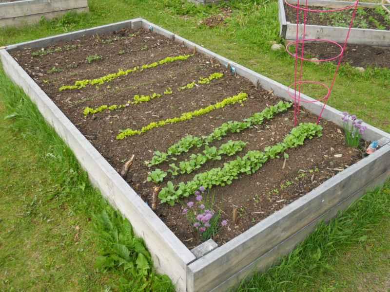Jasper community garden Canada 3