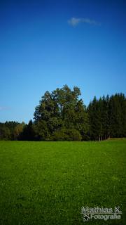 Wachposten des Waldes