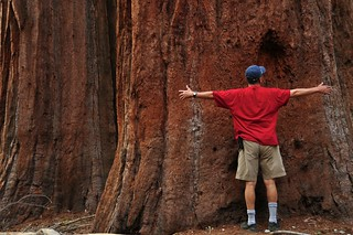 Mariposa Grove of Giant Sequoias | by faungg's photos