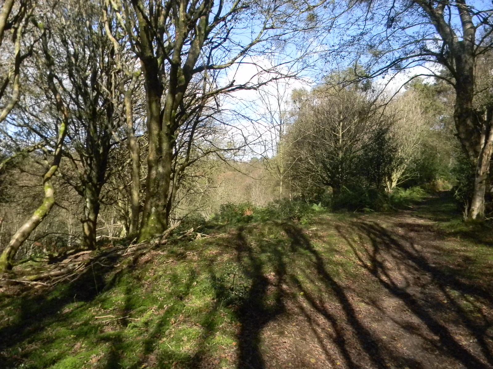 Tree shadows Haslemere Circular