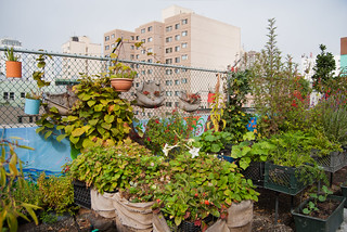 Graze the Roof | by urbanists