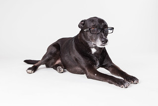 Rio the Black Mixed-Breed Dog in Glasses 2 | by Found Animals