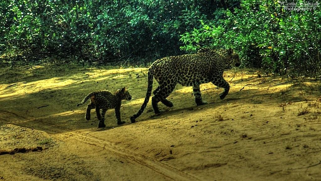 "Image result for wilpattu national park"""