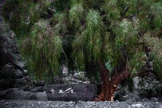 Big stone under a tree