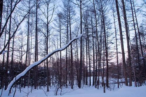 sunset japan hokkaido 北海道 日本 雪 furano 樹 富良野 ニングルテラス hokkaidoprefecture