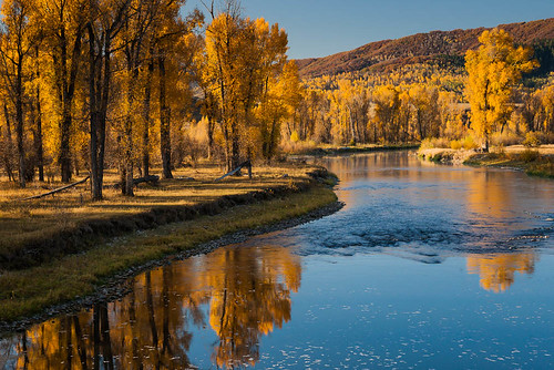 autumn reflection tree water river colorado cottonwood steamboatsprings yampa