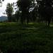 Jardin à Nilgiri