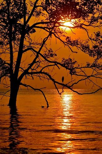 sea reflection crane silhouettes goldenjohor malaysiamuar sunsunsettreewest