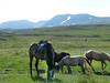 Koně nomádů u stanu, foto: Petr Nejedlý