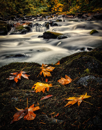longexposure autumn color fall nature wet water leaves creek forest canon river landscape outdoors photography washington moss woods october rocks fallcolor northwest fallfoliage pacificnorthwest flowing 2012 cedarcreekgristmill