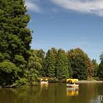 Schöner Baum im Louisenpark