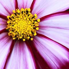 花の星 by Noël Café