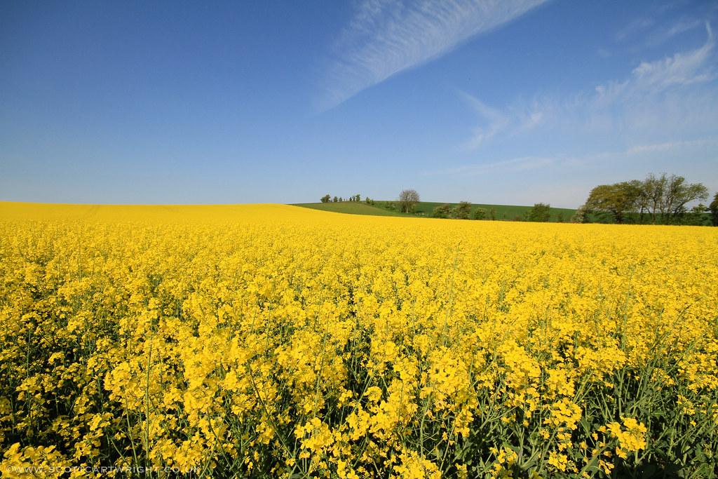 Bright Yellow Summer