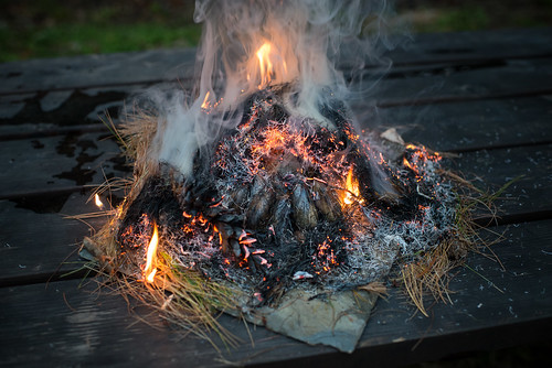 Pine Needles Burning | by goingslowly