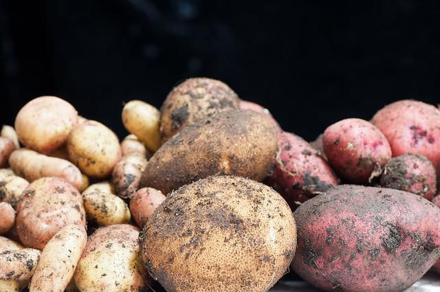 Small Garden Potatos 2012