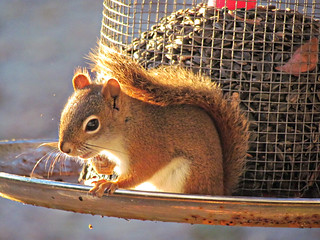 Persistent squirrels begin their success where others end in failure... | by katerha