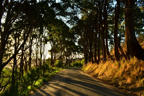 road trees sunset shadow evening nikon shadows australia victoria vic seaview gippsland photodrive lateafternoonlight d5100 nikond5100 phunnyfotos