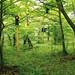 Expedient #3 dalla serie expedient 2010 stampa fotografica su dibond 50x70