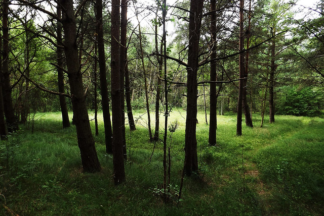 Forests of Baltic Coast (14)