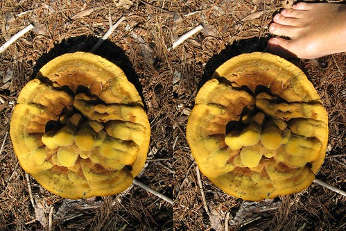mushroom crosseye stereo tremblant