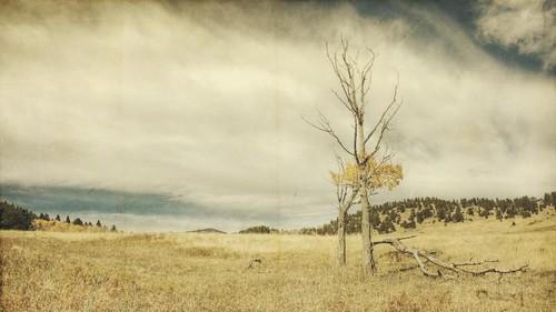 autumn trees sky field clouds canon landscape dead colorado meadow fallen aspen hdr 16x9 elkmeadow fallaspen t1i applesandsisters