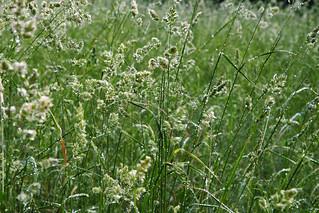 green meadow | by gagilas