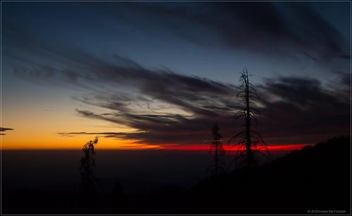 usa sequoia stéphane californie miramonte étatsunis