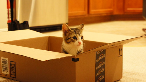 Amelia Kitten in Box | by brownpau